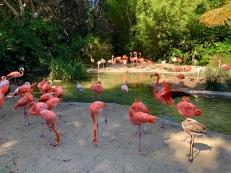 San Diego Zoo 1