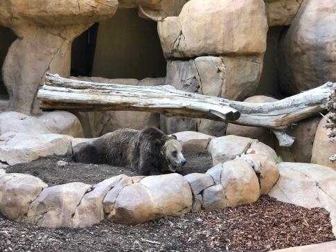 San Diego Zoo 16