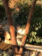 San Diego Zoo 18