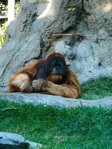 San Diego Zoo 6