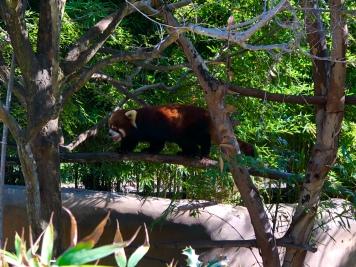 San Diego Zoo 8